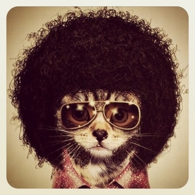 I like Afros and cats.